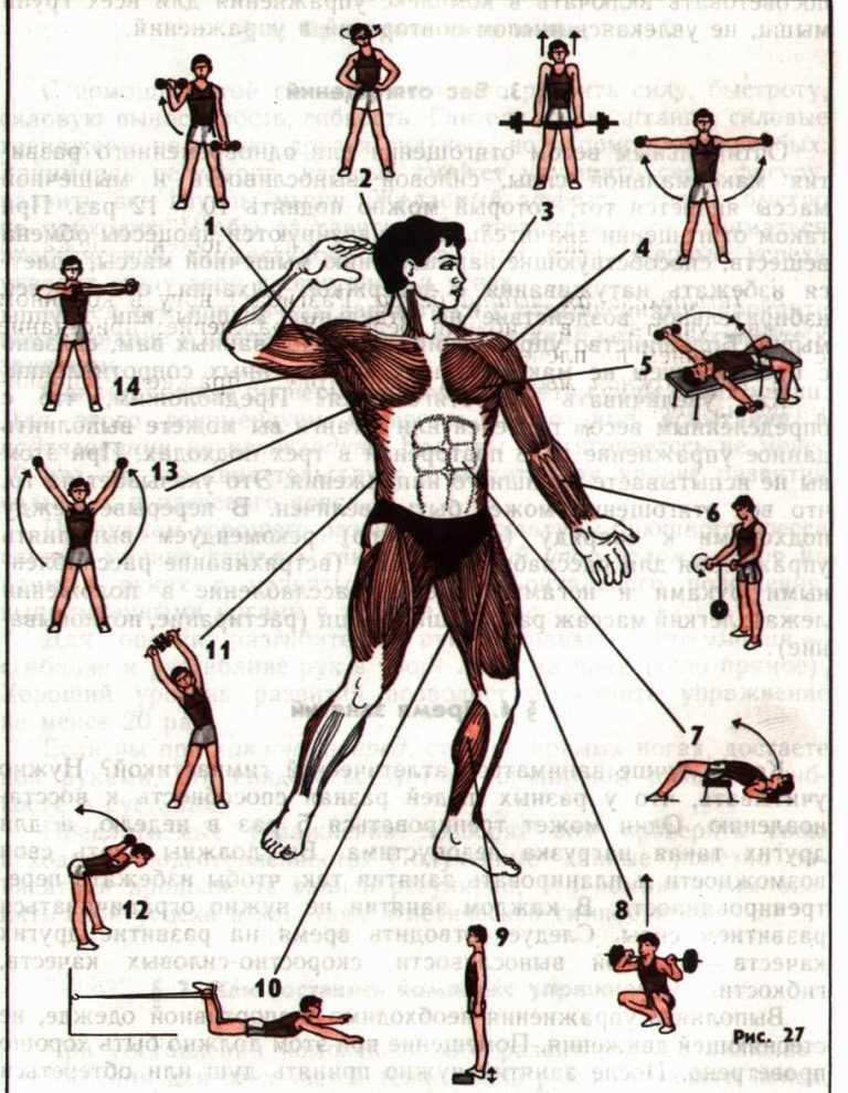Комплекс упражнений для боксера в домашних условиях